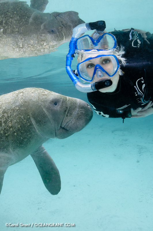 Manatee With Meredith