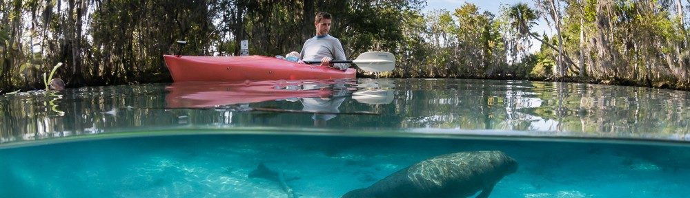 Baby manatee, kayak, father & daughter