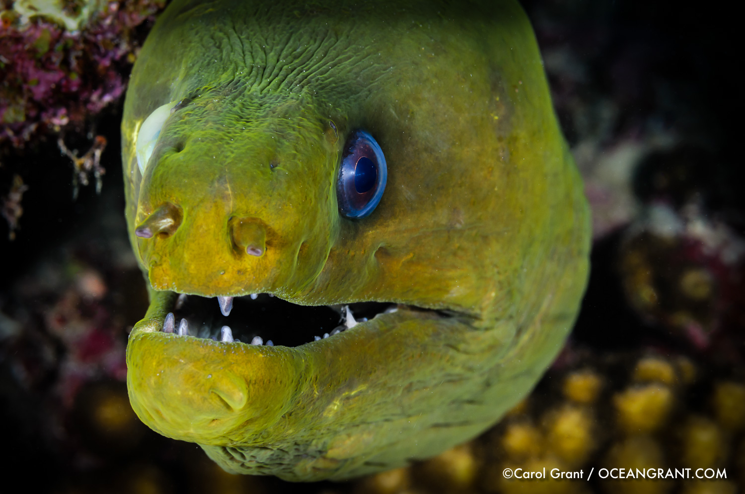 green_moray_aruba_cateract_2011-1394