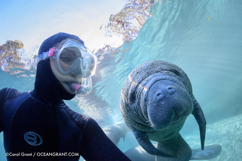 manatee,Carol Grant,selfie,curious,underwater