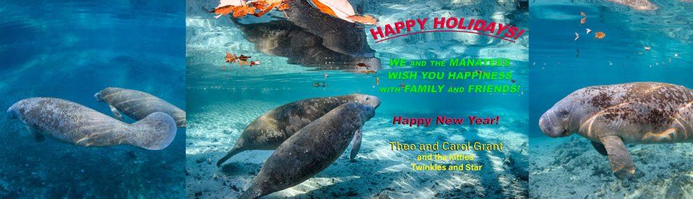 Happy Holidays,Carol Grant,manatees,