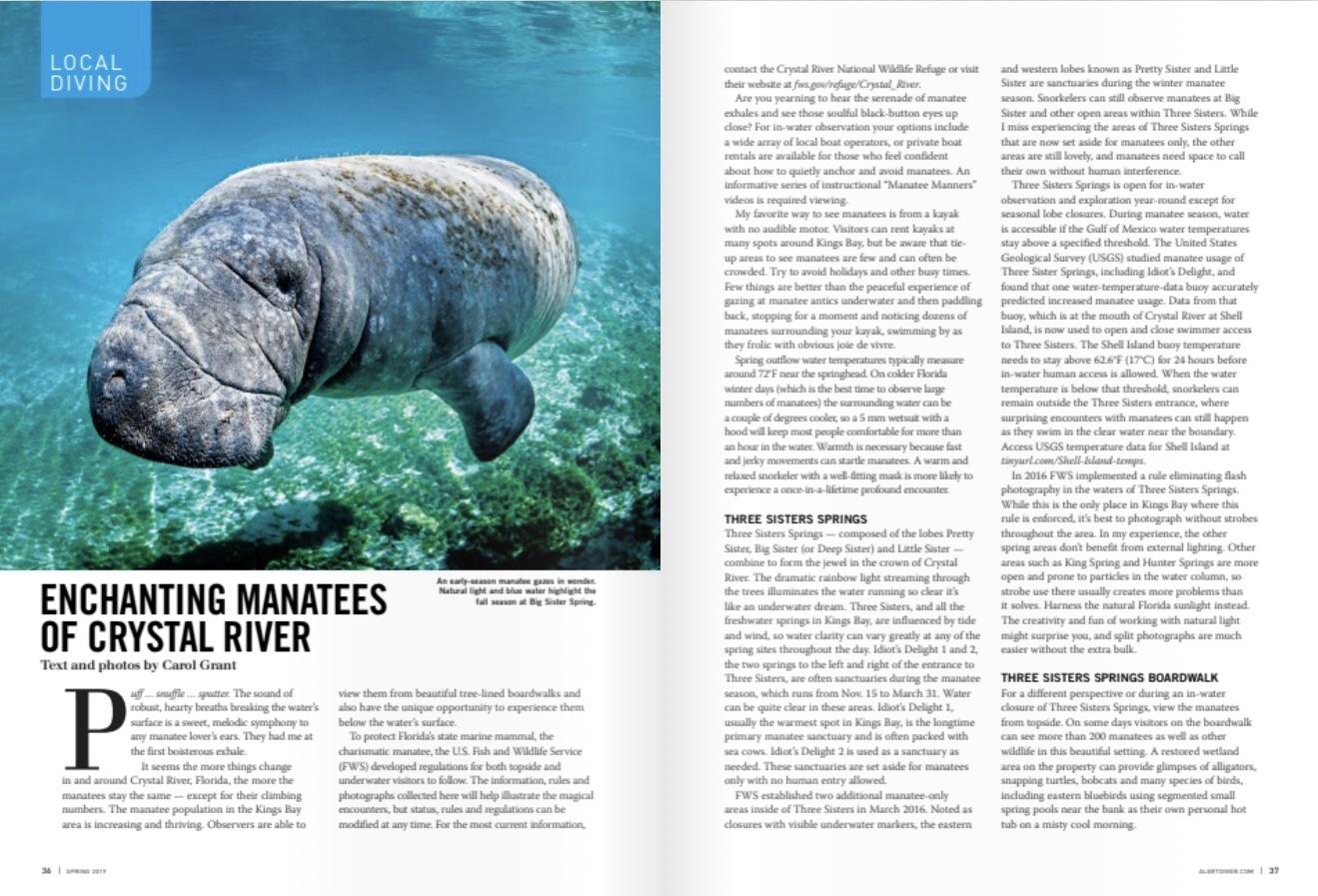 manatees | Manatee Tales