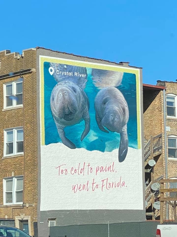 Manatees,building,Chicago,