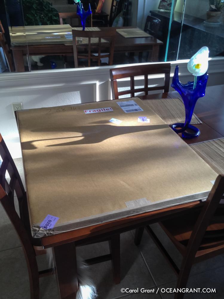 manatee prints, Carol Grant, oceangrant.com