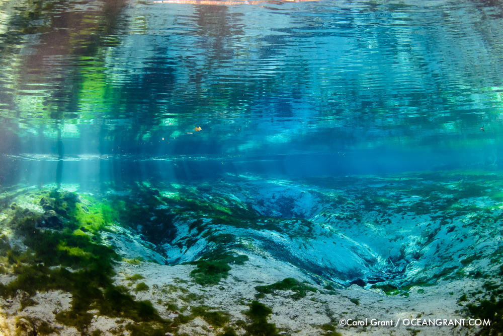 Three Sisters Springs, no manatees yet,