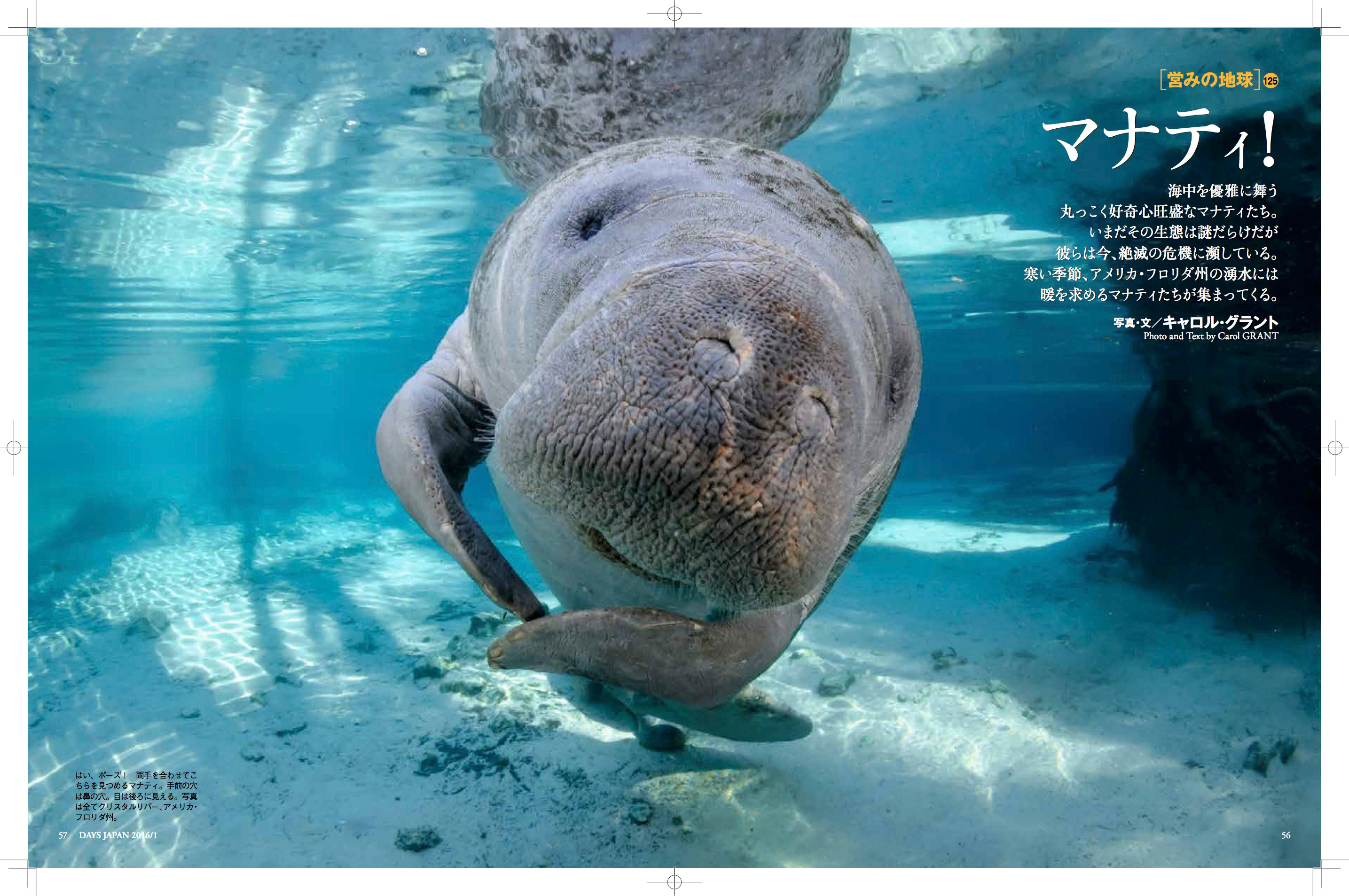 Days Japan,page 1,manatee article,page 56