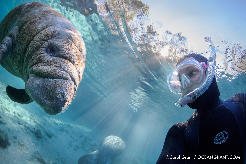 manatees,selfie,Carol Grant,springs,underwater