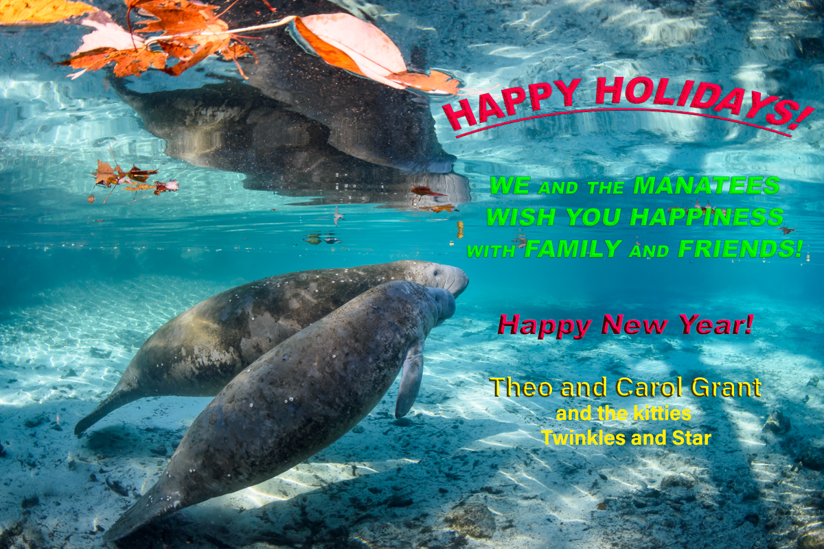 Happy Holidays,©Carol Grant,2017,manatees