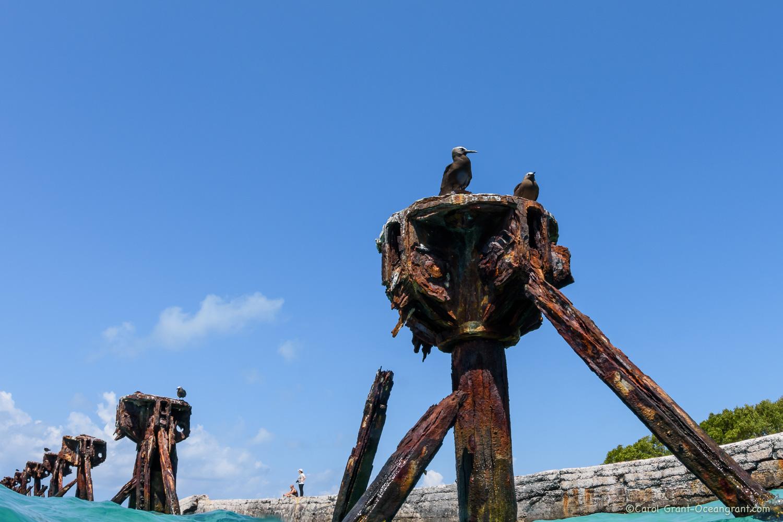 Ft Jefferson Dry Tortugas,©CGrant-oceangrant.com