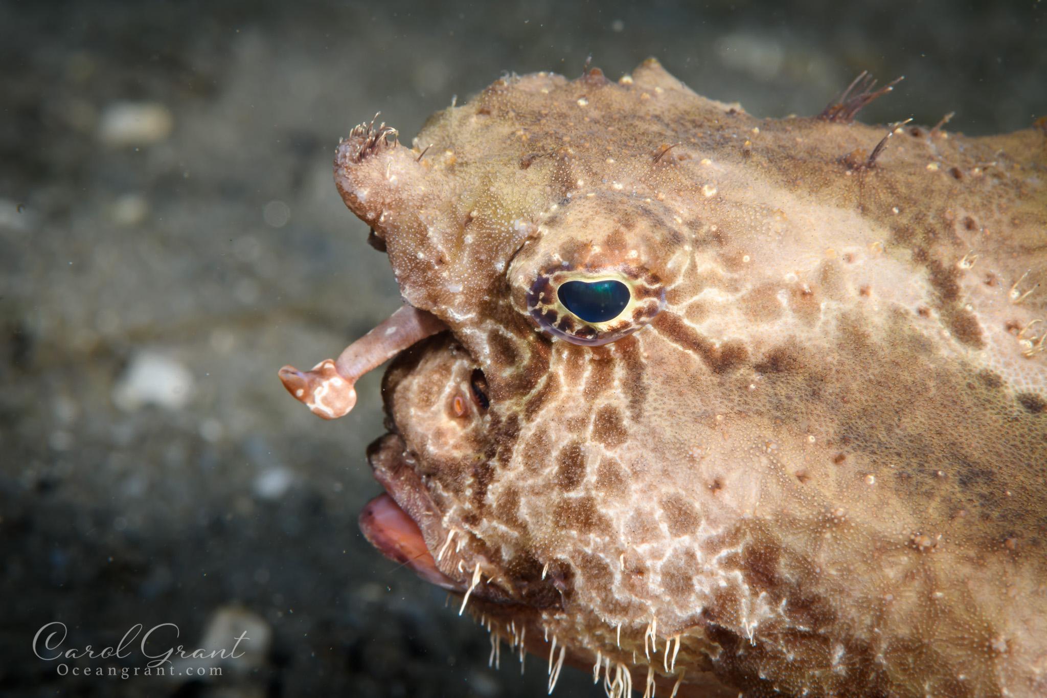Polkadot baitfish lure,scuba diving,underwater,©️CGrant/Oceangrant.com